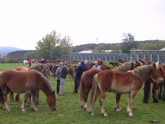 Feria del Caballo La Pernía