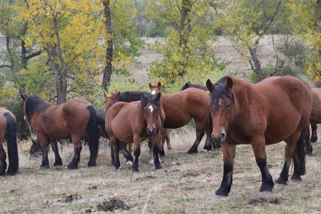 Unos quinientos caballos participan en la XIII Feria de San Salvador