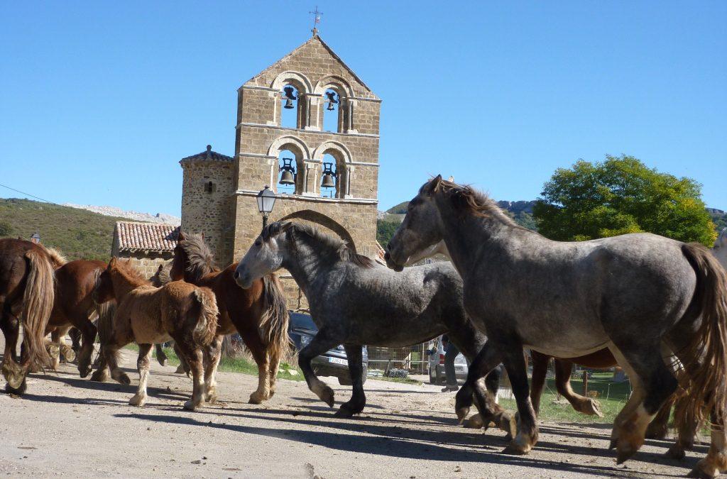 Centenares de equinos participarán el domingo en la Feria Caballar de La Pernía