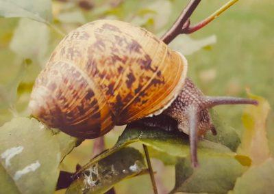 Fauna (18)