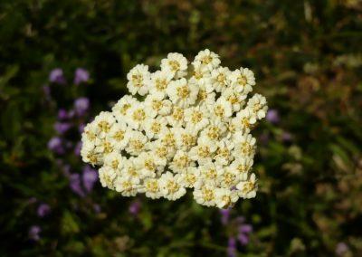 Flora (61)